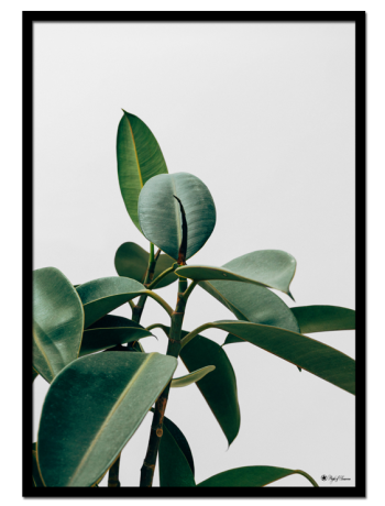 Green Plant poster | Botanical photo art of a green plant on clean background.