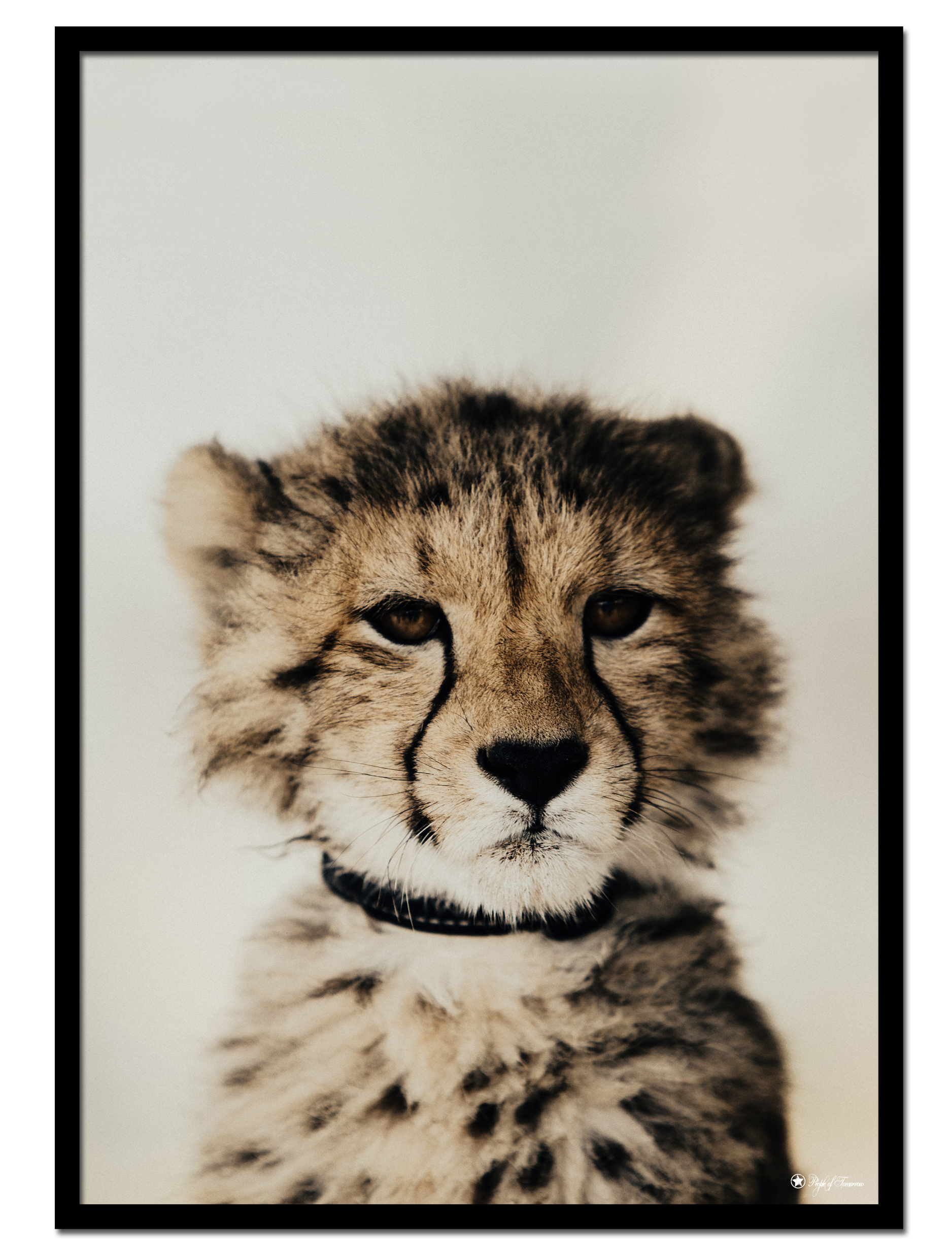 "Tiny Cheetah poster | Photo art poster of a cheetah cub. Match with ""Big Brown Beach"" for the perfect gallery wall."