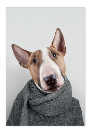 Bill the Bull Terrier Art Card |Art doesn't have to be big to make a big impression. Our art cards are about the size of postcards, but they'll brighten up any room with their eye-catching designs. With a selection of unique art work printed on high quality paper, these are a versatile type of art for all sorts of occasions.