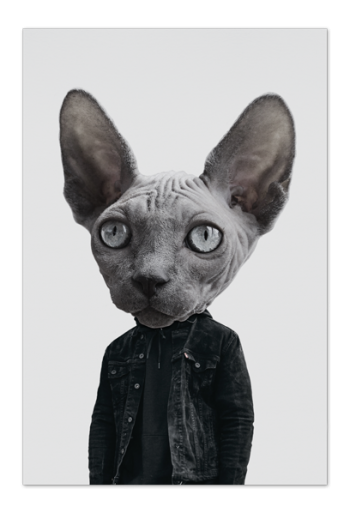Mr. Sphynx Art Card |Art doesn't have to be big to make a big impression. Our art cards are about the size of postcards, but they'll brighten up any room with their eye-catching designs. With a selection of unique art work printed on high quality paper, these are a versatile type of art for all sorts of occasions.